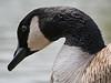 Birds_0041-2 copy