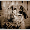 Lucy Girl-