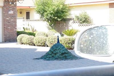 peacock court - step 3 - start raising feathers