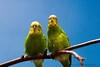 Love birds?