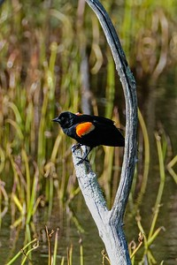 Ipswich Wildlife Sanctuary - Topsfield, MA.