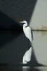 geometric egret