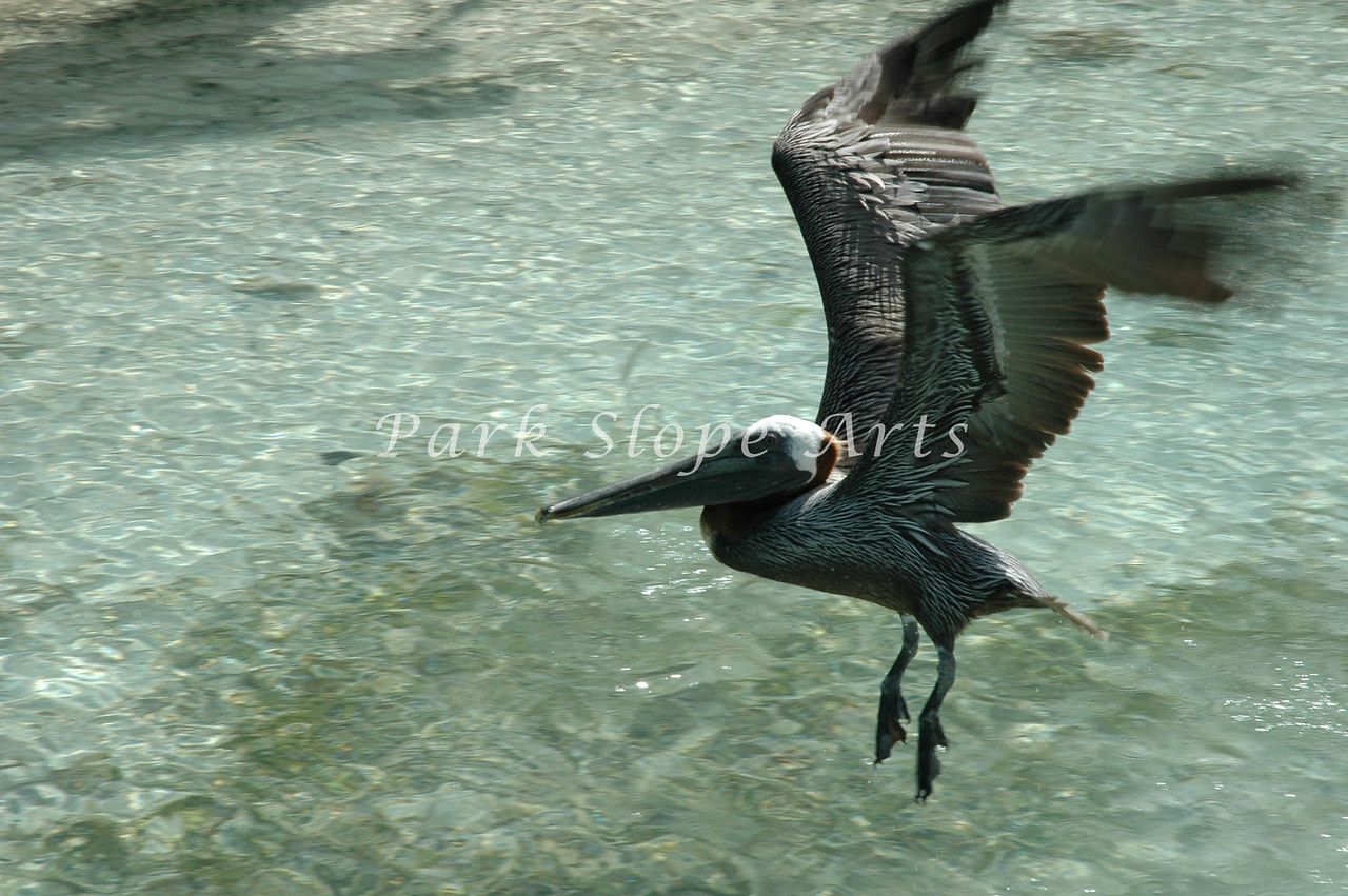 Birds-5170