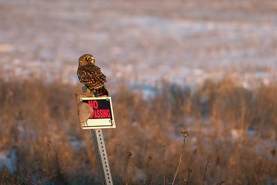 SE owl on sign -0336