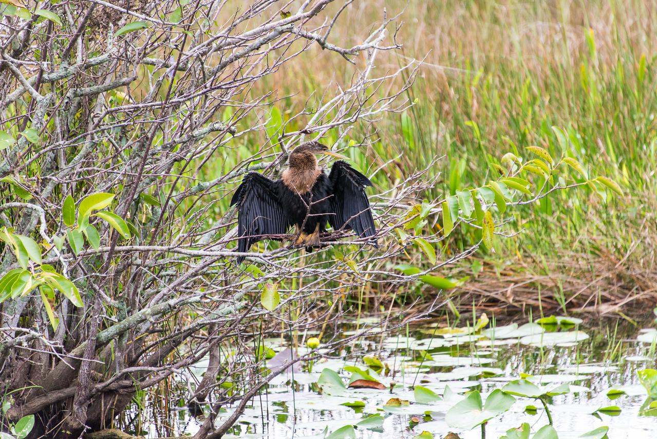 Everglades National Park, Florida - December 2013