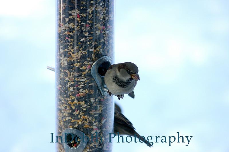 CR bird 12-03 0987