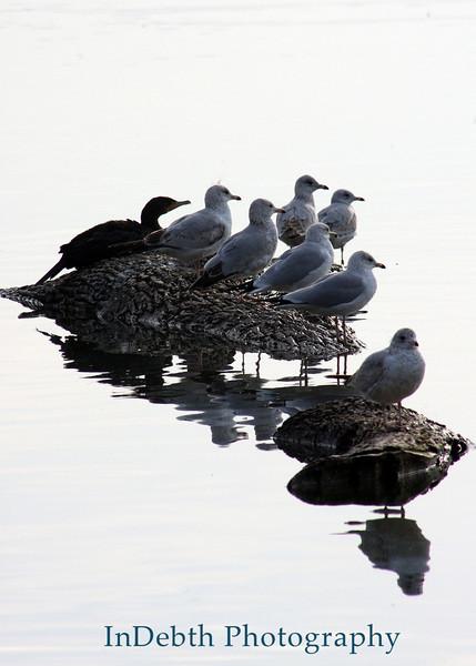 1189 Whiterock birds (b) 5X7