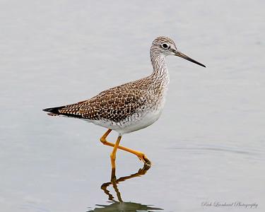 Bird at The Oceanside Nature Marine Study Area.