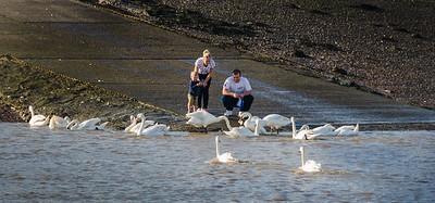 A Family Feeding Bread To Swans