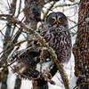 owltreebunnycrop