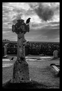 Crow on Cross, Tipperary, Ireland