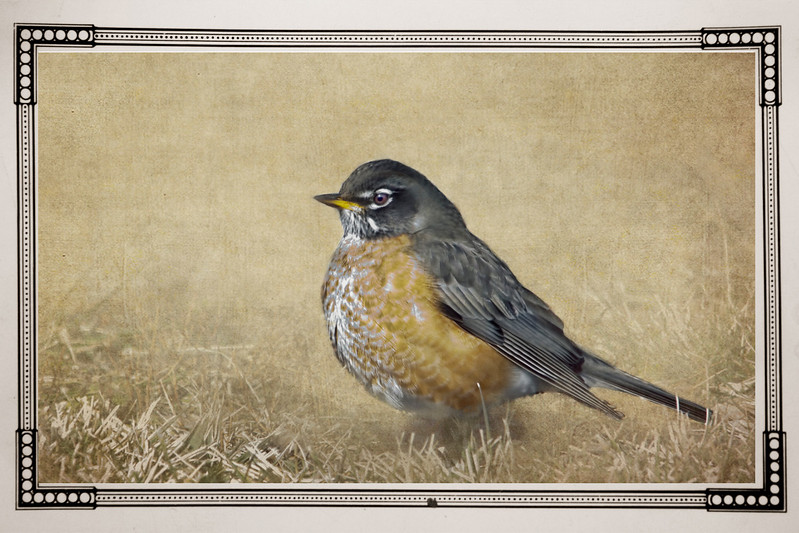 A robin edited with textures and frame added.