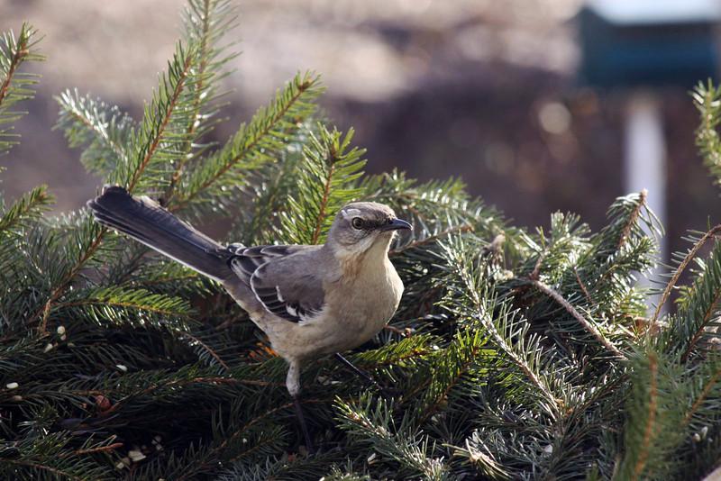 Wild Bird Santuary 055