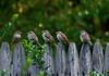 Birds Of Wisdonm