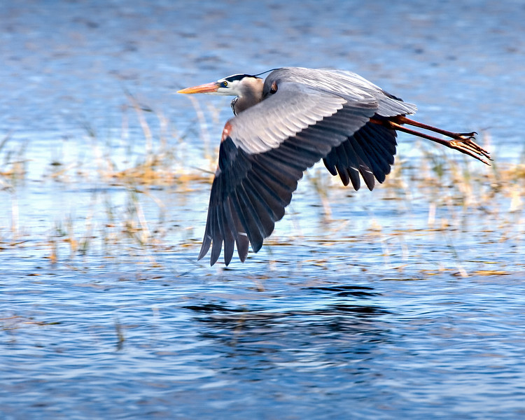 GBH_in_flight_IMG_6565-1