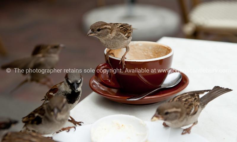 Pesky sparrows scavenging.