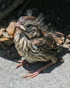 Cute little baby bird
