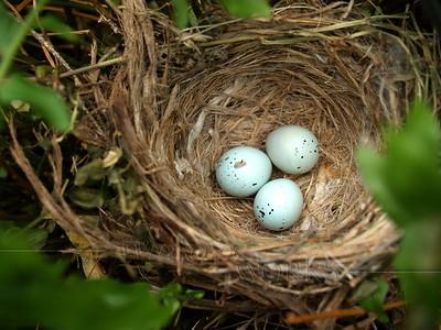 Nest in tree in North Carolina