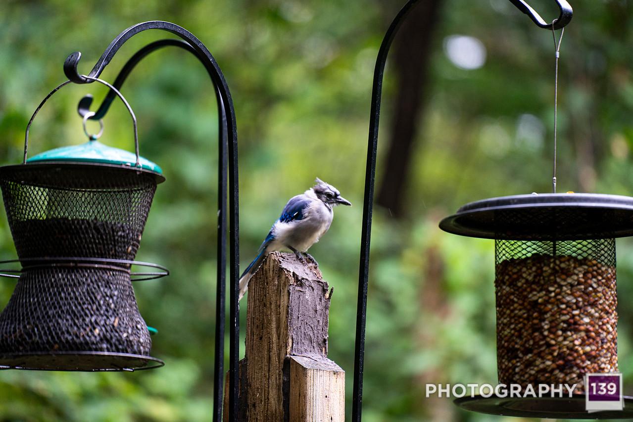 Walnut Woods Bird Blind