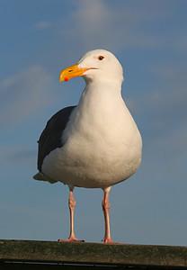 3873 Gull