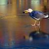 Seagull in Newport, Rhode, Island