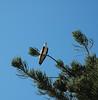 Osprey, Indian River, FL