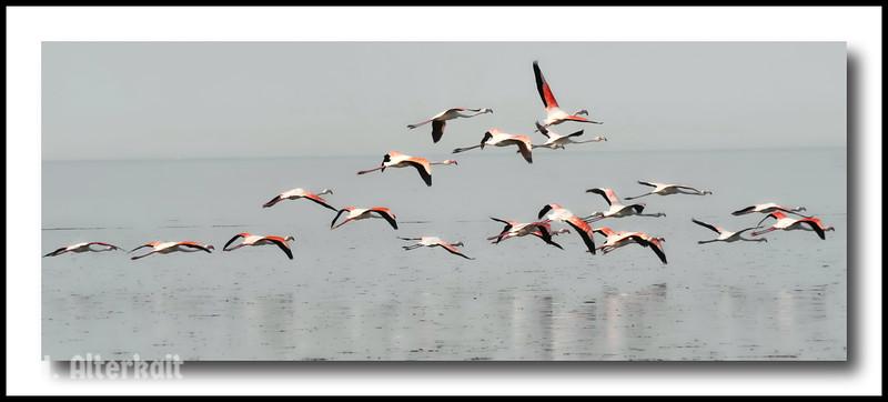 Animals - Feathered