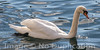 Drooler - February 2014<br /> Luzern, Switzerland<br /> (1x2)<br /> Best Reproduction - No Larger Than 8x16