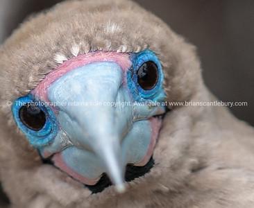 Birds photo library, ornithology.
