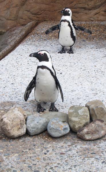"""Penguins at Camden's """"Adventure Aquarium"""""""