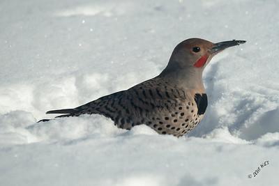 Flicker in Snow