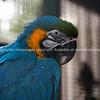 Parrots at Ashmore Holiday Park.
