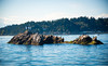 Blakely Rock, Bainbridge Island, WA