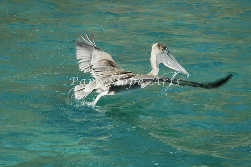 Birds-5229