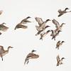 A Flock of Ducks