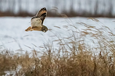 SE owl hovering ISO 20000 L 5607-
