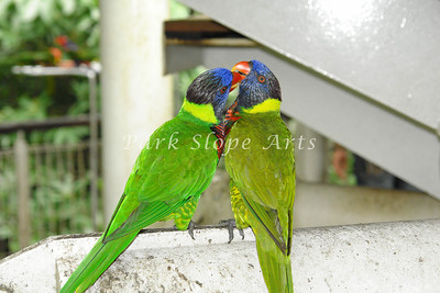 Birds-00136