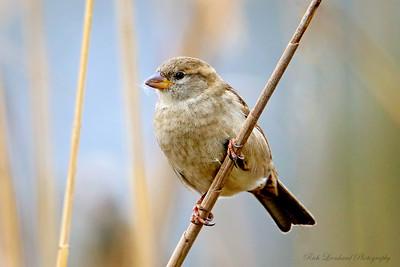 Little bird in Wantagh, NY.