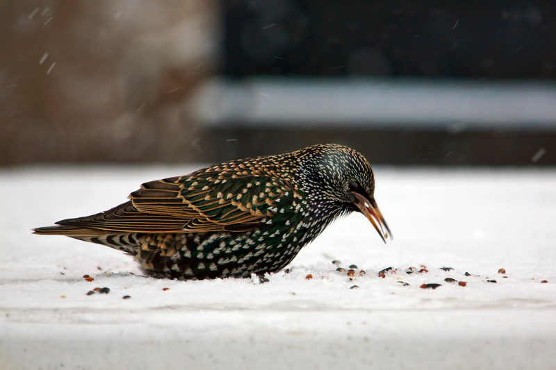 Winter is hard on birds. we can all help by putting out a little seed.