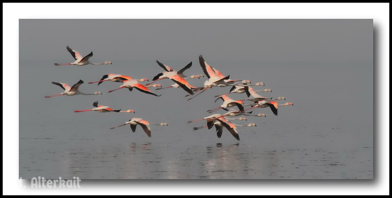 Kuwait, Freezone, Flamingo,