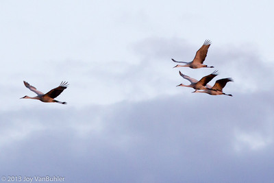 Sandhill Cranes at the Haehnle Audubon Sanctuary