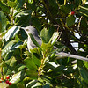 Bird in the bush