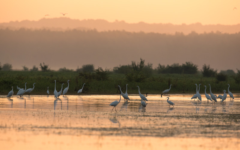 Morning at St. Catherine's Creek National Wildlife Refuge