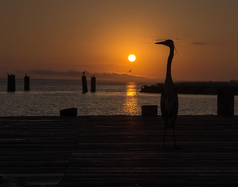 Sunrise with the Herons, Fort Morgan, Alabama