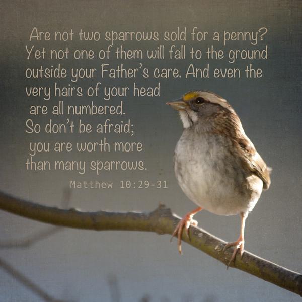 Sparrow - Matthew 10: 29-31