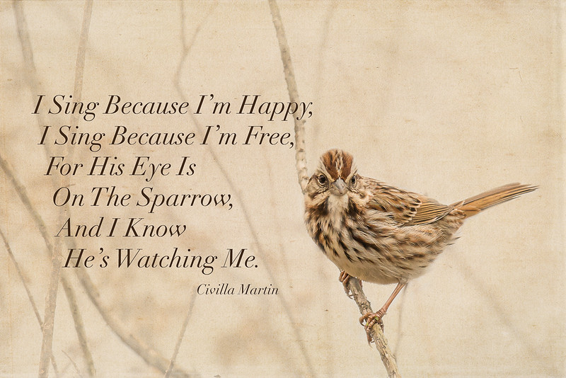 I Sing Because I'm Happy ...