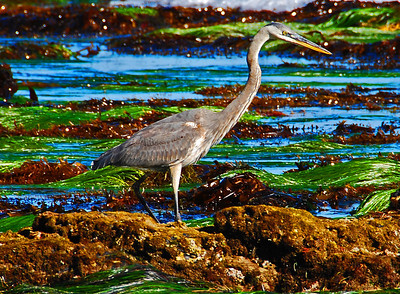 Heron and Green