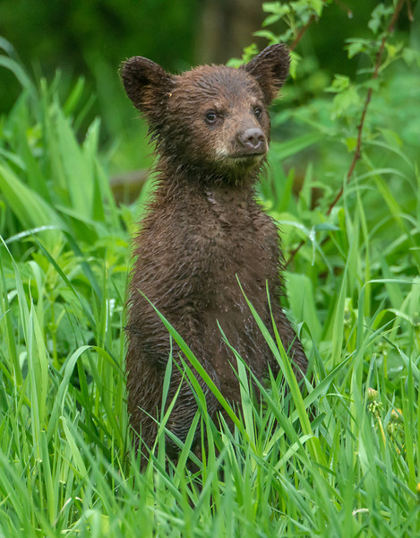 Standing spring cub