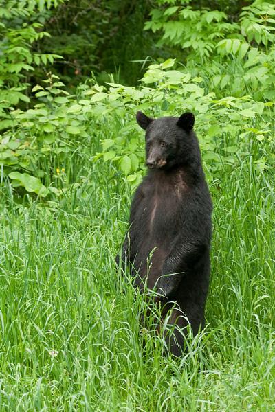 MBB-10100: Standing bear