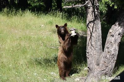 Good Reason to be Bear Smart